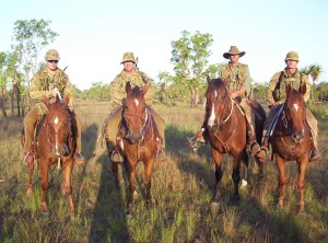 Australian war horses today