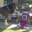 First War Animal Memorial for a school in Australia